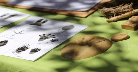 Atelier pédagogique sur les empreintes d'animaux